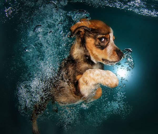 元気な子犬達の水中写真に癒やされる! - 06