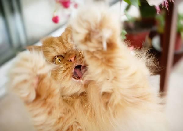世界一不機嫌な猫が、世界一カワイイ! - 02