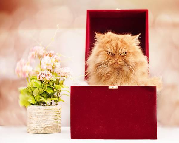 世界一不機嫌な猫が、世界一カワイイ! - 03