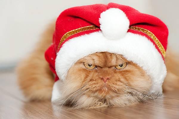 世界一不機嫌な猫が、世界一カワイイ! - 04