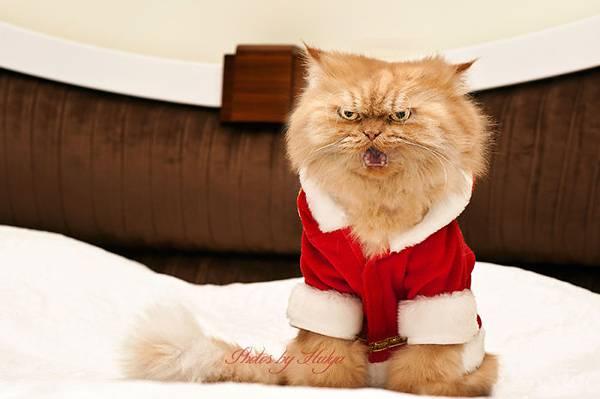 世界一不機嫌な猫が、世界一カワイイ! - 05