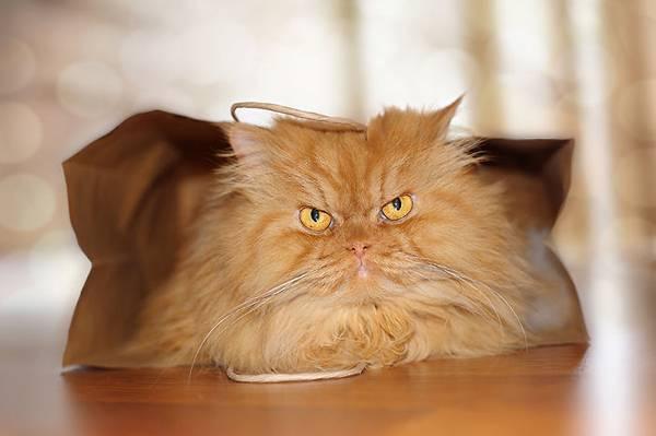 世界一不機嫌な猫が、世界一カワイイ! - 06