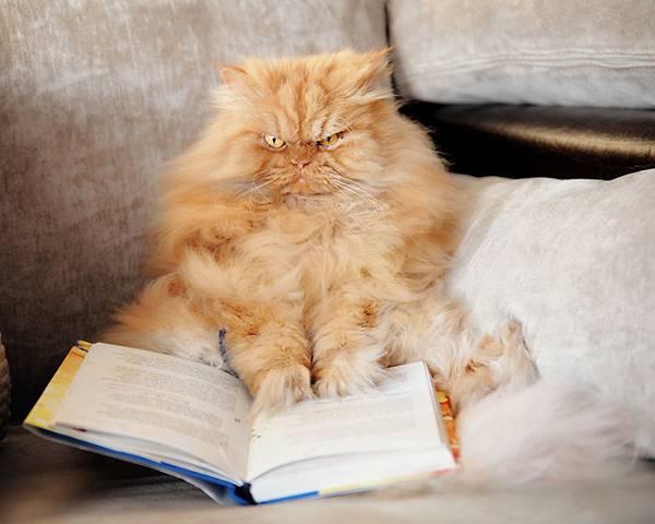 世界一不機嫌な猫が、世界一カワイイ! - 07
