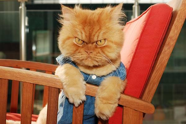 世界一不機嫌な猫が、世界一カワイイ! - 08