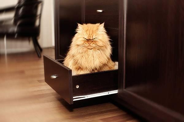 世界一不機嫌な猫が、世界一カワイイ! - 09