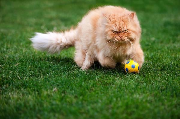 世界一不機嫌な猫が、世界一カワイイ! - 11