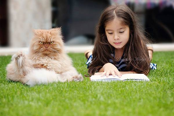 世界一不機嫌な猫が、世界一カワイイ! - 12