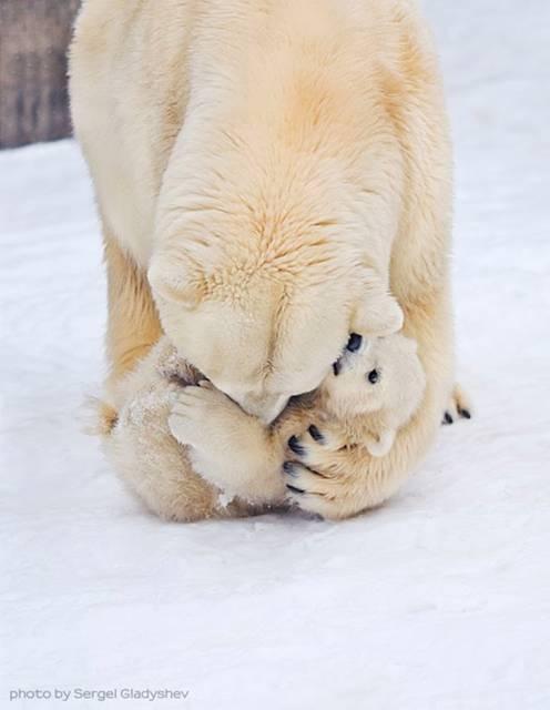 愛情表現たっぷりの動物達の写真10選 - 09