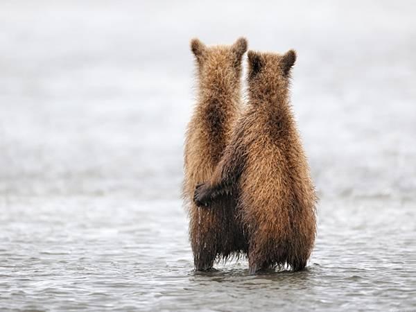 愛情表現たっぷりの動物達の写真10選 - 10