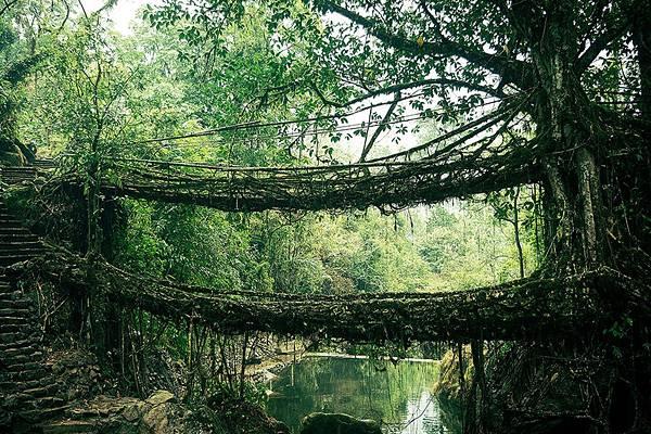 自然と完璧に調和した美しすぎる世界の橋 - 09