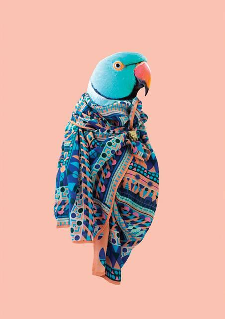 鳥にスカーフを巻かせてみたら予想以上にファッショナブル! - 02