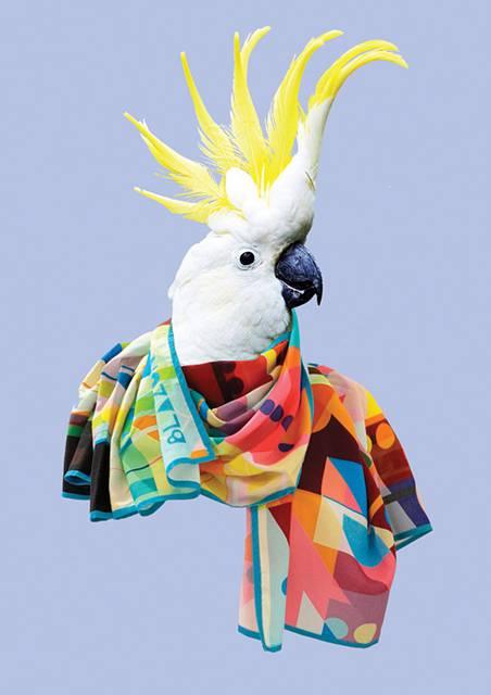 鳥にスカーフを巻かせてみたら予想以上にファッショナブル! - 04