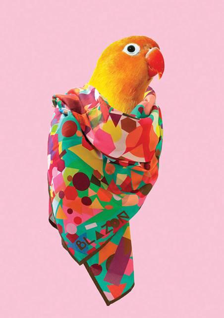 鳥にスカーフを巻かせてみたら予想以上にファッショナブル! - 05