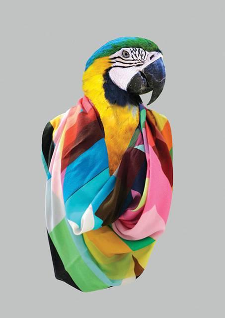 鳥にスカーフを巻かせてみたら予想以上にファッショナブル! - 06