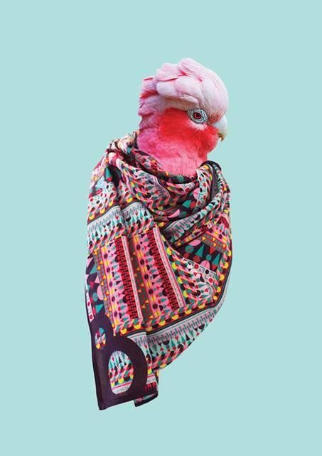 鳥にスカーフを巻かせてみたら予想以上にファッショナブル! - 09