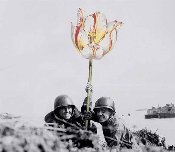 「銃を花に置き換えてみた」という美しいコラージュアート - 02