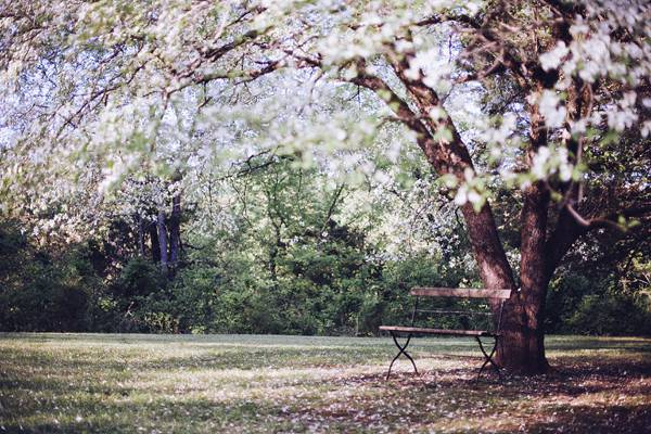 Spring Time Tree White Blossoms Wooden Bench Outdoors
