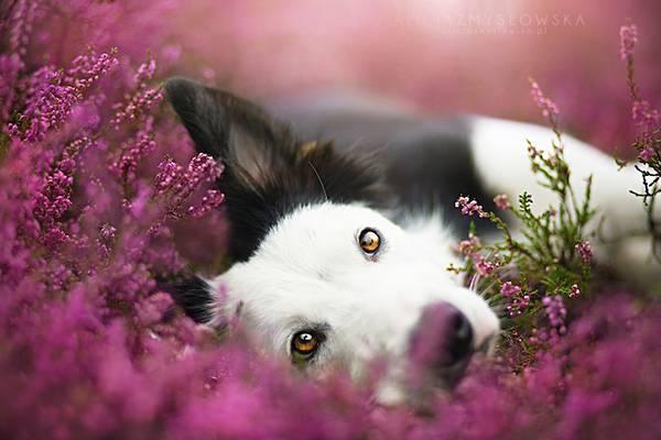 あまりにも可愛くて美しい花と犬達の写真作品集 - 01