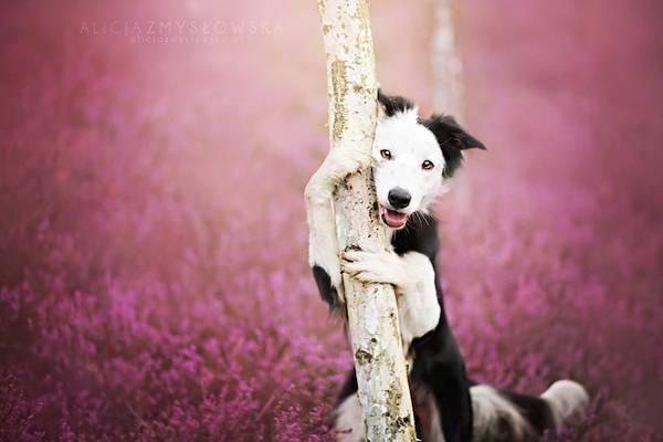 あまりにも可愛くて美しい花と犬達の写真作品集 - 02
