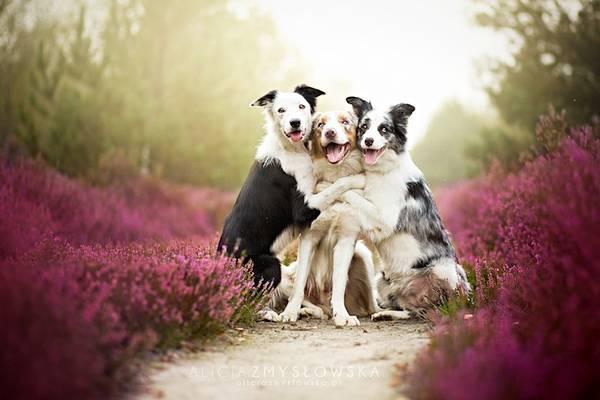 あまりにも可愛くて美しい花と犬達の写真作品集 - 03