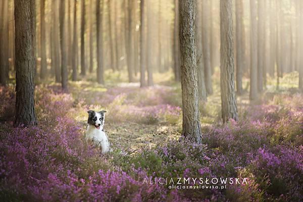 あまりにも可愛くて美しい花と犬達の写真作品集 - 04