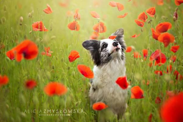 あまりにも可愛くて美しい花と犬達の写真作品集 - 05