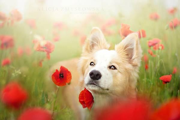 あまりにも可愛くて美しい花と犬達の写真作品集 - 06