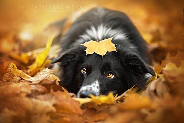 あまりにも可愛くて美しい花と犬達の写真作品集 - 07