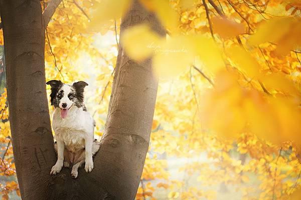 あまりにも可愛くて美しい花と犬達の写真作品集 - 08