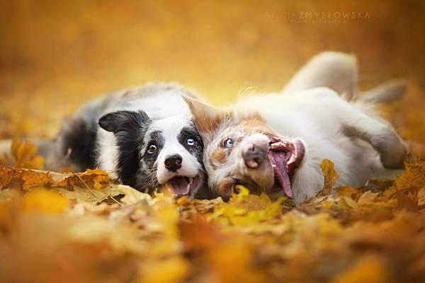あまりにも可愛くて美しい花と犬達の写真作品集 - 09