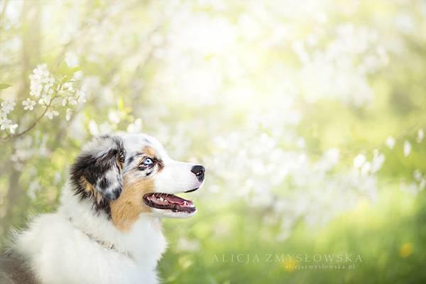 あまりにも可愛くて美しい花と犬達の写真作品集 - 10