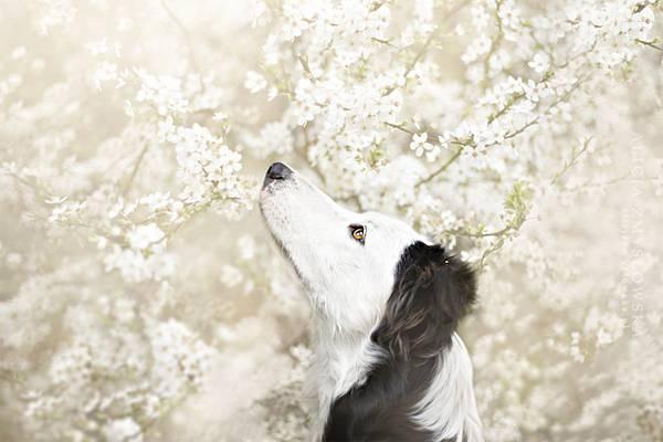 あまりにも可愛くて美しい花と犬達の写真作品集 - 11