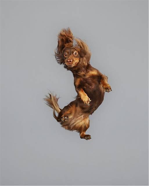 強風の中でジャンプする犬の可愛い写真シリーズ - 03