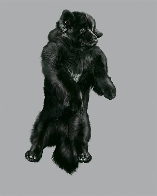 強風の中でジャンプする犬の可愛い写真シリーズ - 07