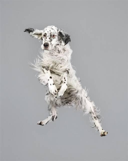強風の中でジャンプする犬の可愛い写真シリーズ - 09