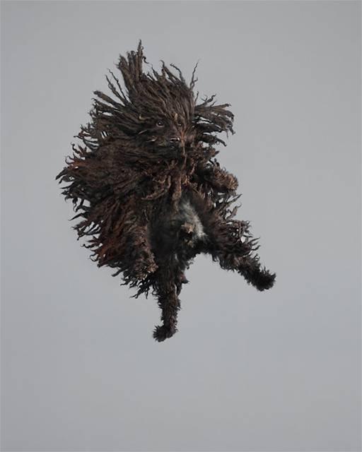 強風の中でジャンプする犬の可愛い写真シリーズ - 10