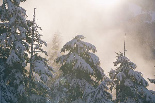 winter snow three
