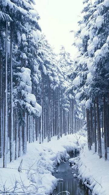 Snow Covered Forest Creek IPhone 6 Wallpaper