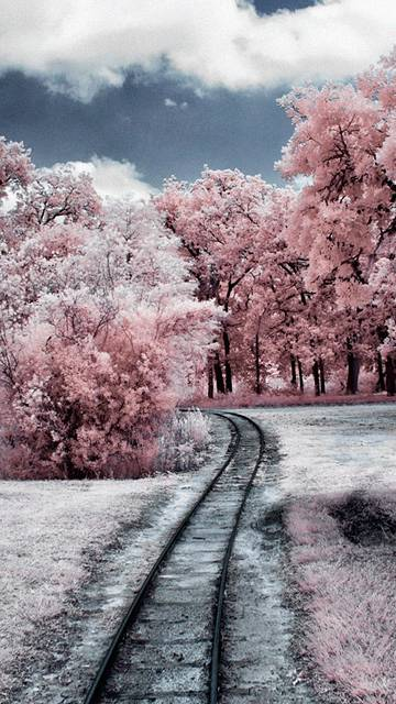Through Pink Woods IPhone 6 Wallpaper