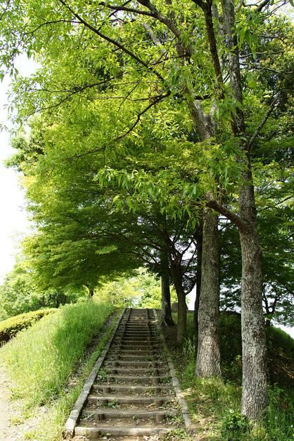 公園の散歩道・階段1
