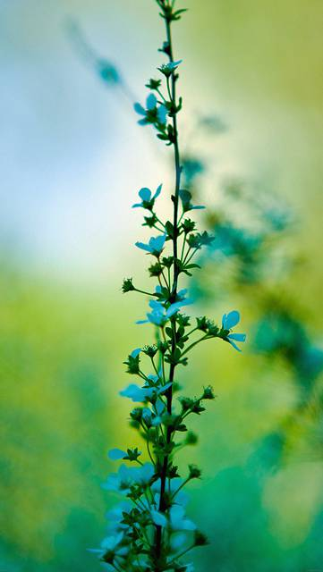mf95-blue-flower-day-bokeh-nature
