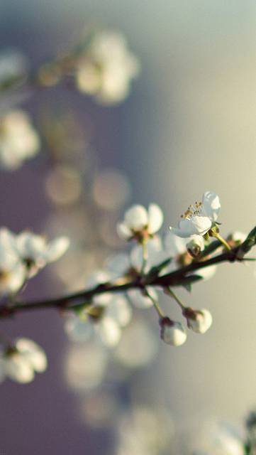 me42-spring-flower-white-happy-moments