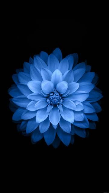 ac99-wallpaper-apple-blue-lotus-iphone6-plus-ios8-