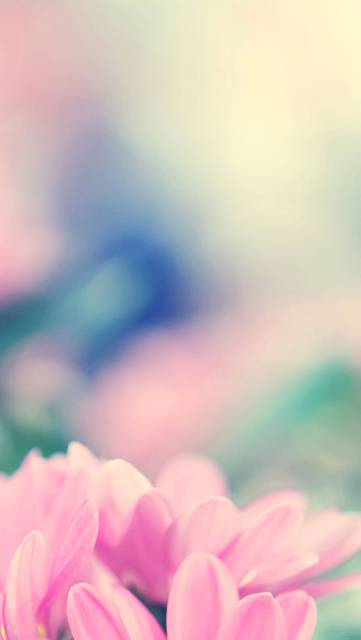 mc22-wallpaper-boo-184-flower-pink-blurred