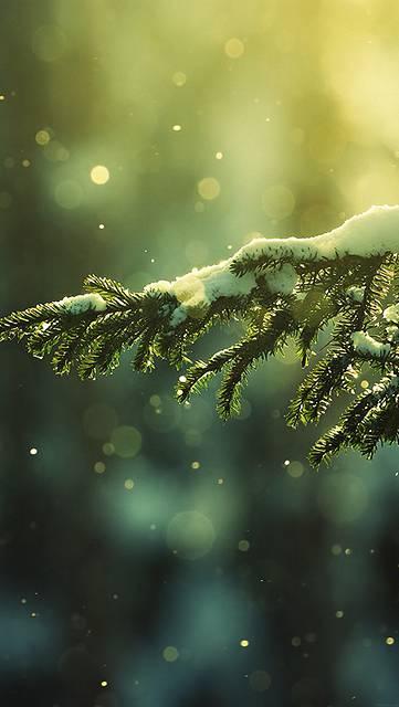 mk27-snowing-tree-winter-nature-mountain