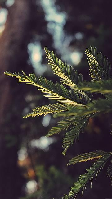 mk43-tree-winter-light-bokeh-life-mountain-nature