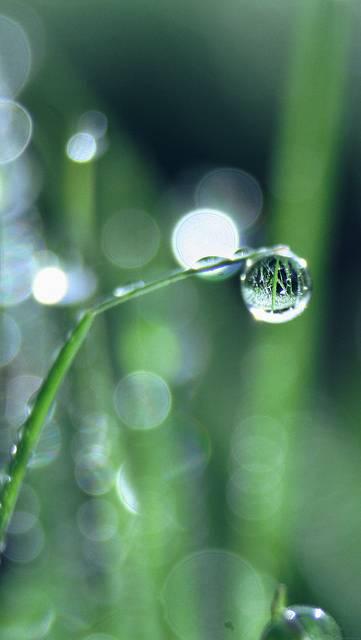mk61-bokeh-leaf-raindrop-nature-pure