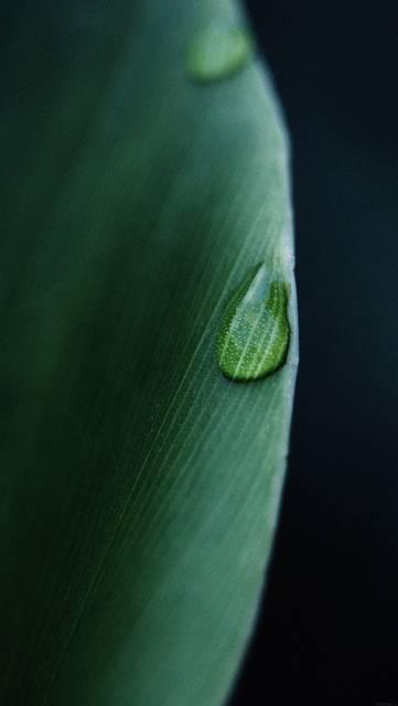 mk06-leaf-raindrop-green-nature