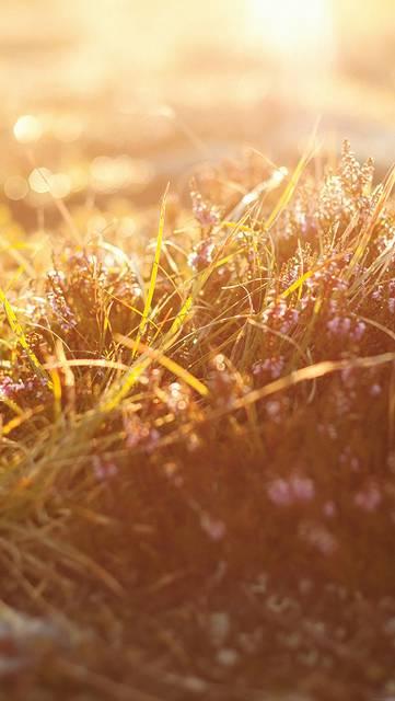 mj39-sun-rise-flower-grass-love-nature