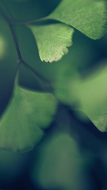 mf57-good-luck-blue-clovers-leaf-nature